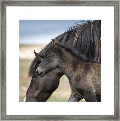 Mare And Foal, Iceland. Icelandic Framed Print by Panoramic Images