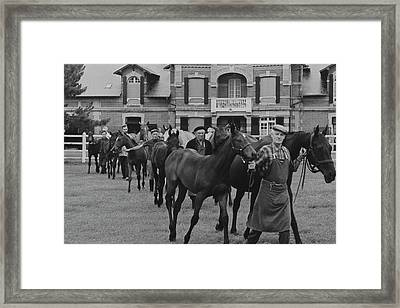 Mares And Foals At The Farm Of Marie-helene De Framed Print