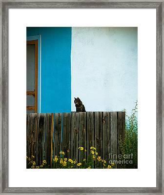 Marfa Cat Framed Print by Sonja Quintero