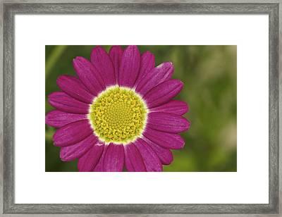 Marguerite Framed Print