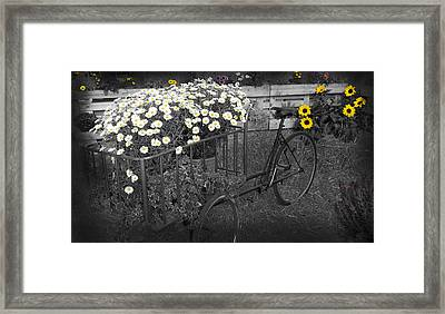 Marguerites And Bicycle Framed Print