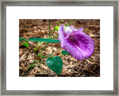 Framed Print featuring the photograph Mariana by Rob Sellers