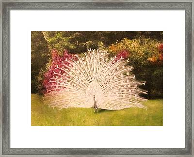 Maria's White Peacock Framed Print