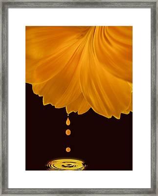 Marigold Factory Framed Print