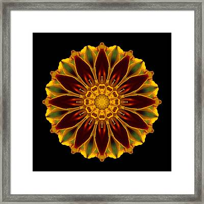 Framed Print featuring the photograph Marigold Flower Mandala by David J Bookbinder