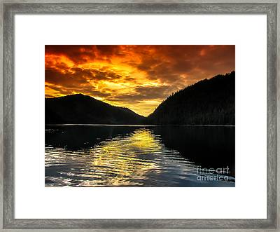 Marine Beauty Framed Print by Robert Bales