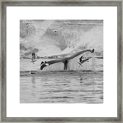 Marine Excitement... Framed Print by Nina Stavlund