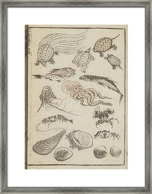 Marine Life Framed Print by British Library