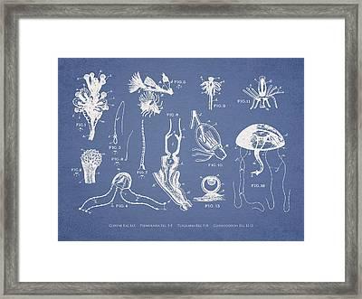 Marine Organisms Hydromedusae Framed Print by Aged Pixel