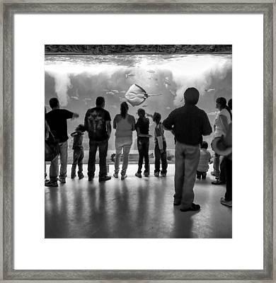 Marine Spectators Framed Print by Lynn Palmer