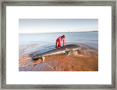 Marine Wildlife Rescue Service Training Framed Print by Ashley Cooper
