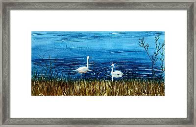 Marion Lake Swans Framed Print