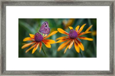 Mariposa Dos Flores Framed Print