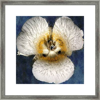 Mariposa Lily Two Framed Print by Belinda Greb