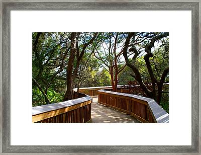 Maritime Forest Boardwalk Framed Print