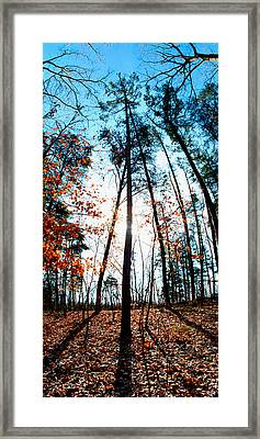 Framed Print featuring the photograph Mark Twain Forest by Jon Emery