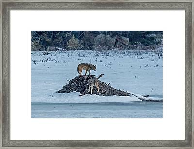 Marking My Territory Framed Print by Steve Dunsford