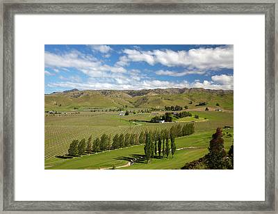 Marlborough Golf Club, Vineyard Framed Print