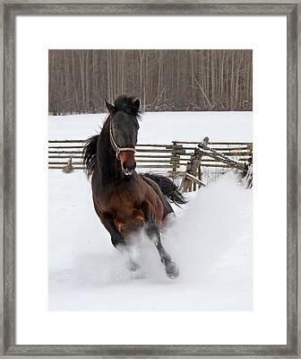 Marley And Me Framed Print
