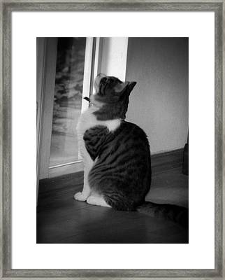 Marley Framed Print by Kelli Donovan