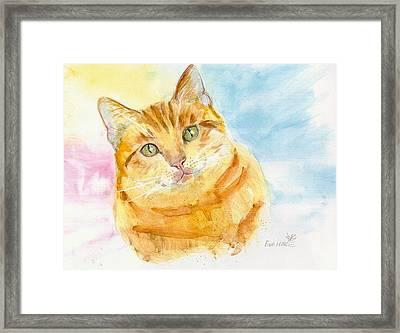 Marmalade Cat Framed Print