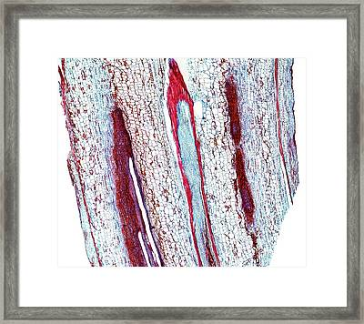 Marrow Stem Framed Print