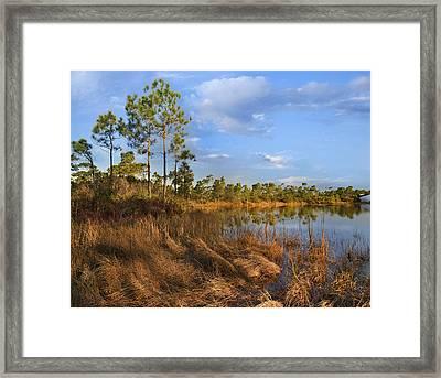 Marsh And Trees Saint George Isl Florida Framed Print