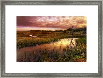 Marsh At Dawn Framed Print by Debra and Dave Vanderlaan