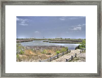 Marsh Framed Print by David Troxel