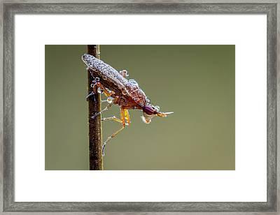 Marsh Fly Framed Print by Heath Mcdonald