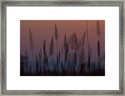 Marsh Grasses In Kaziranga National Framed Print by Steve Winter