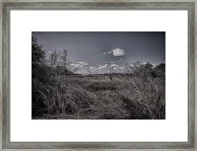Marsh Framed Print