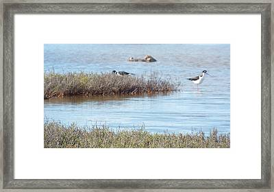 Marsh Life Framed Print