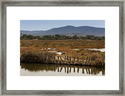 Framed Print featuring the photograph Marsh by Paul Indigo