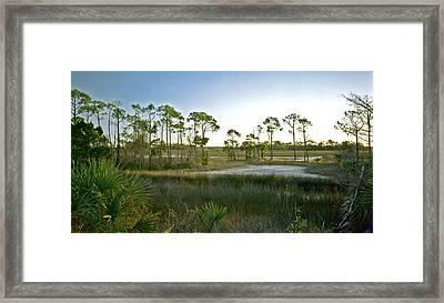 Marsh. St. Marks N.w.r. Framed Print