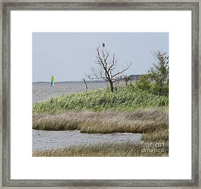 Marsh With Boat And Osprey Framed Print by Cathy Lindsey
