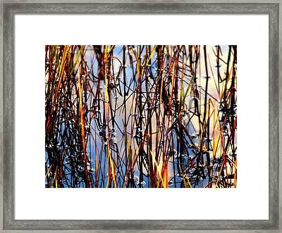 Marshgrass Framed Print by Karen Wiles