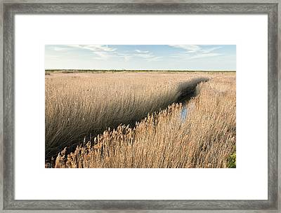 Marshland, Uk Framed Print by Science Photo Library