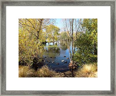 Marshlands New Zealand Framed Print by Joyce Woodhouse
