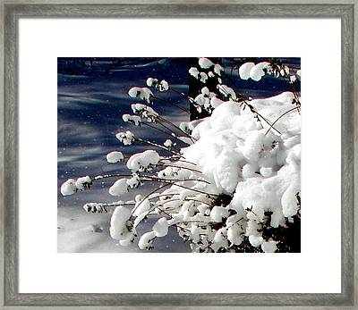 Marshmallow Sprouts Framed Print by Pamela Hyde Wilson