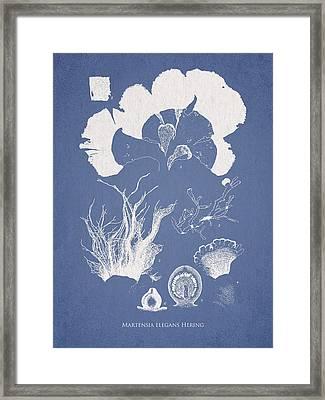 Martensia Elegans Hering Framed Print by Aged Pixel
