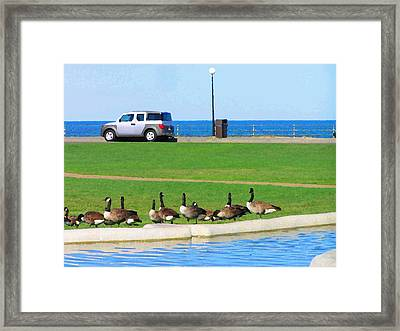 Martha Vineyard Framed Print by Oleg Zavarzin