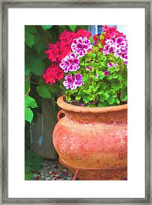 Martha Washington Geraniums In Textured Clay Pot Framed Print by Sandra Foster