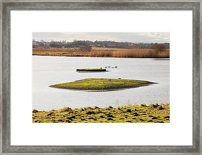 Martin Mere Bird Reserve Framed Print