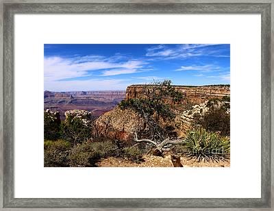 Marvelous Grand Canyon South Rim  Framed Print
