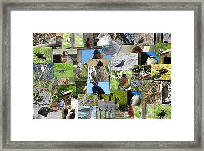 Maryland Birds Framed Print by Tom Ernst