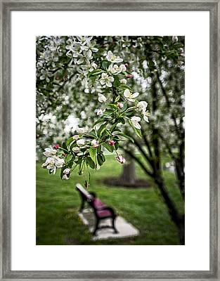 Mary's Tree And Bench Framed Print