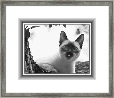 Masked Contempt Framed Print by Thomas Fields