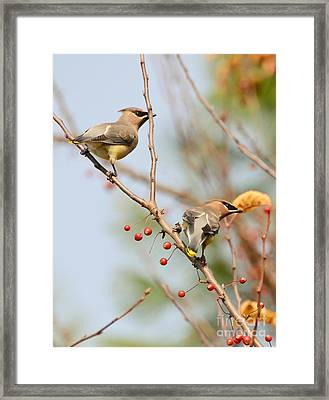 Framed Print featuring the photograph Masked Duo by Kerri Farley