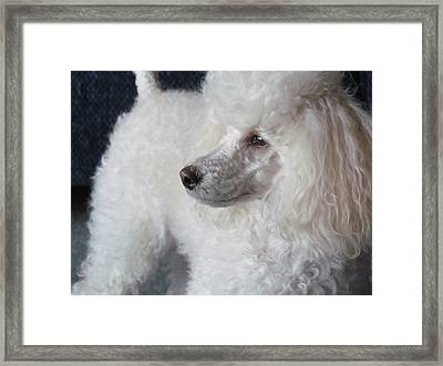 Maski Small White Poodle  Framed Print by Joyce Woodhouse